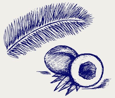 droop: Coconut and palm tree Illustration