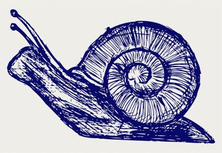 slowness: Snail sketch