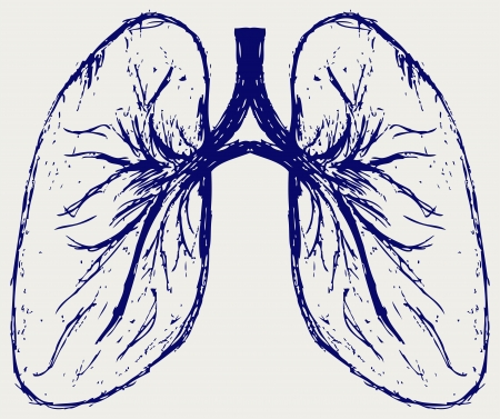 Lungs person. Sketch Stock Vector - 15869040