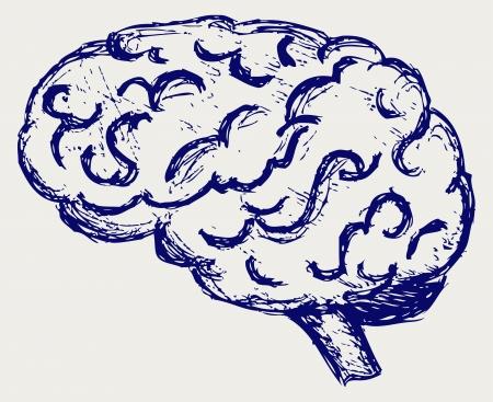 fissures: Human brain. Sketch