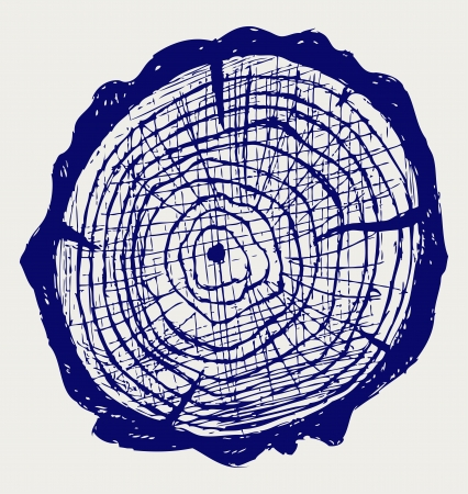 rings on a tree: Cross section of tree stump  Doodle style Illustration