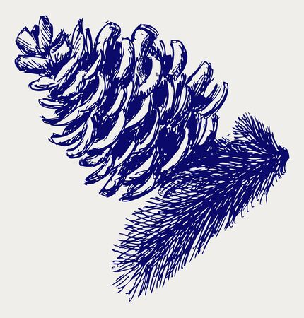 Pine strobile. Doodle style Vector