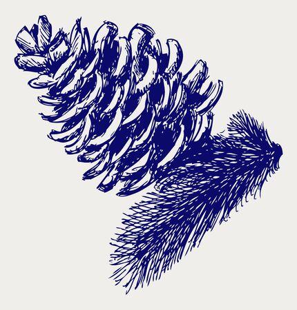 Pine cone: Pine strobile. Le style Doodle