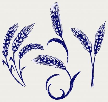 centeno: El trigo y el centeno. Estilo Doodle