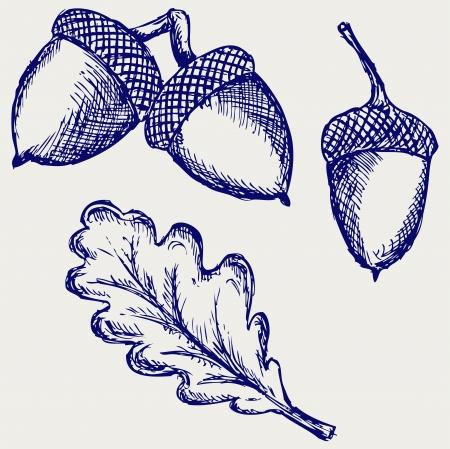 acorn: Acorn. Doodle style