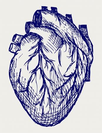 vintage anatomy: Human Heart. Doodle style Illustration