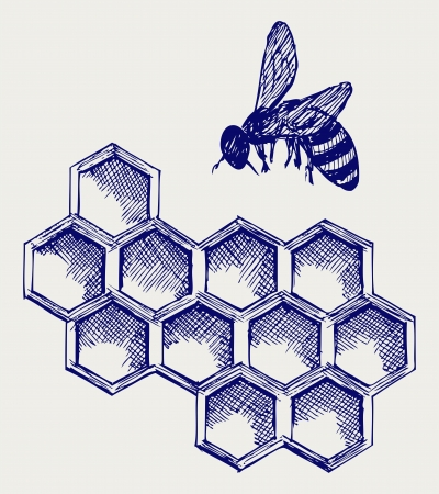 bee honey: Working bee on honeycells
