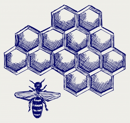 honey bee: Working bee on honeycells