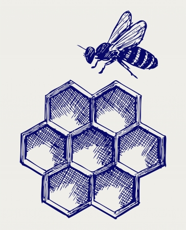 studious: Working bee on honeycells