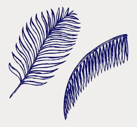 palm frond: Palm leaves. Doodle style