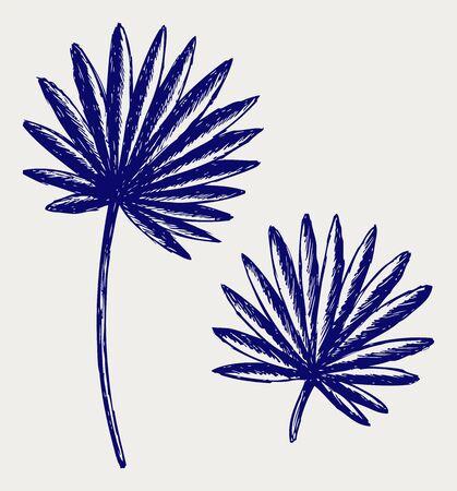 Palm verlässt. Doodle-Stil