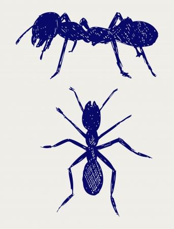 Portrait of ant. Sketch Stock Vector - 15921513