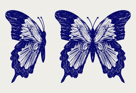 Butterfly  Doodle style Stock Vector - 15921568