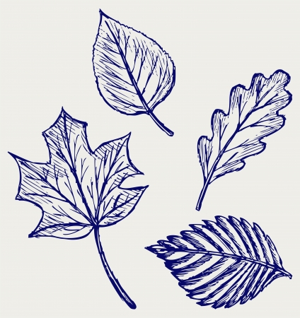 aronia: Collection autumn leaves. Doodle style