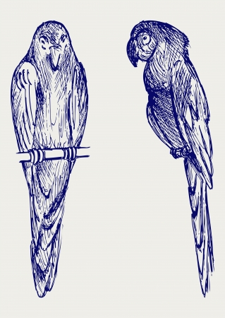 ara: Couple of parrot  Doodle style Illustration