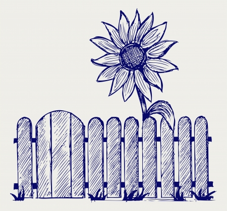 Sunflower and fence. Doodle style Vector