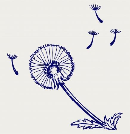 blowing wind: Blow Dandelion. Doodle style Illustration