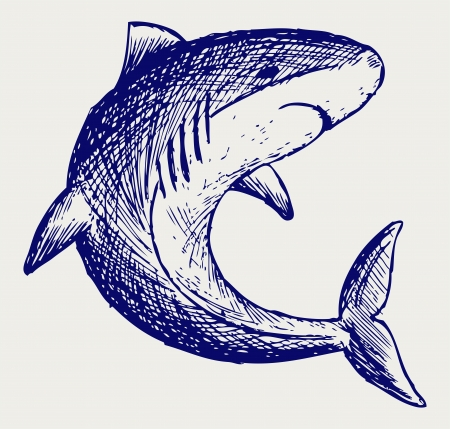 Reef Shark. Doodle style Stock Vector - 16908511