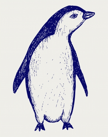 penguins: Penguin sketch