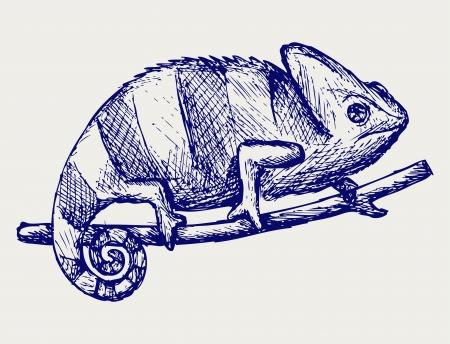 chamaeleo: Chameleon. Doodle style