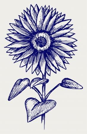 simple flower: Beautiful sunflower. Doodle style Illustration