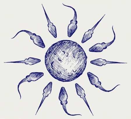 sperm cell: Sperm and egg. Doodle style