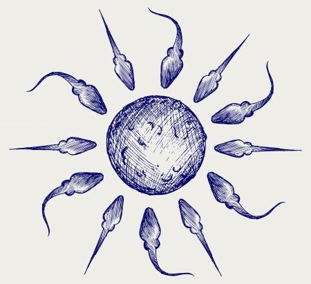 semen: Sperma e uova. Doodle stile