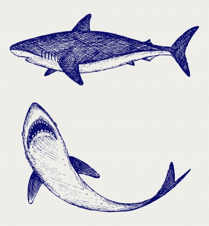 carcharodon: Reef Shark. Doodle style Illustration