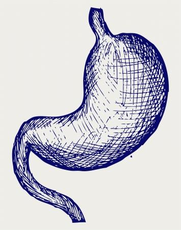 viscera: Human stomach. Doodle style