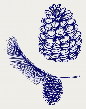 conifers: Pine branch with cones. Doodle style