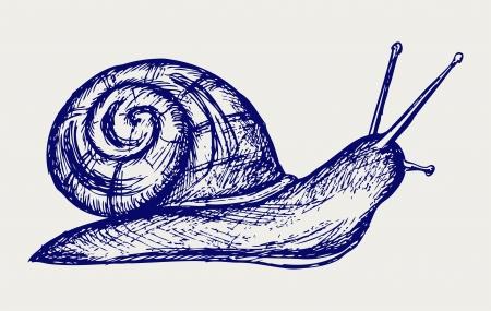 gastropod: Garden snail. Doodle style