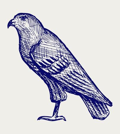 Hawk. Doodle style Stock Vector - 18062110