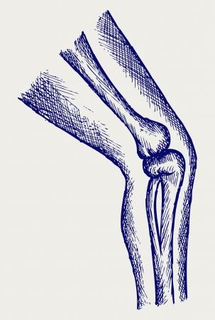 meniscus: Human leg bones. Doodle style