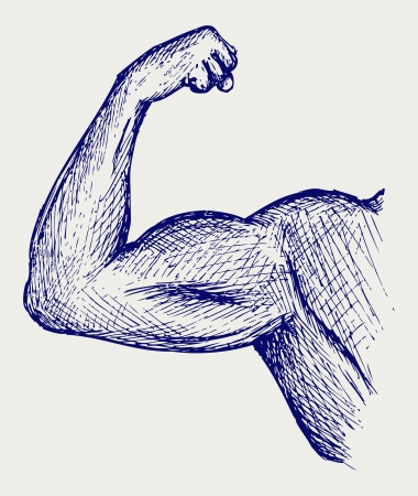 arm muscles: Strong biceps. Doodle style Illustration