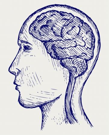 인간의 뇌와 머리. 낙서 스타일