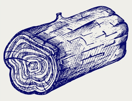 wood cross section: Cross section of tree stump. Doodle style