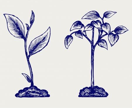 enten: Handvol van de grond en plant. Doodle stijl Stock Illustratie