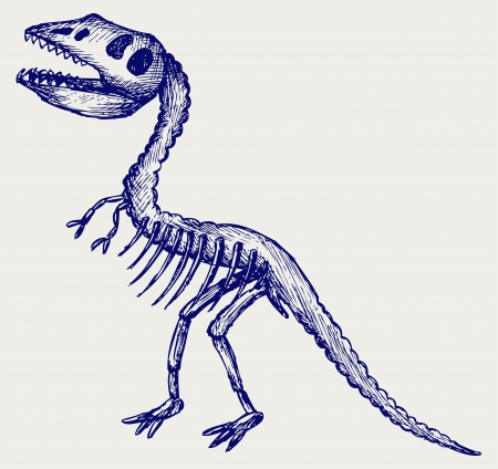 paleontological: Tyrannosaurus skeleton. Doodle style Illustration