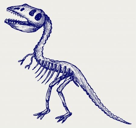 paleontological: Tyrannosaurus skeleton. Doodle style Illustration