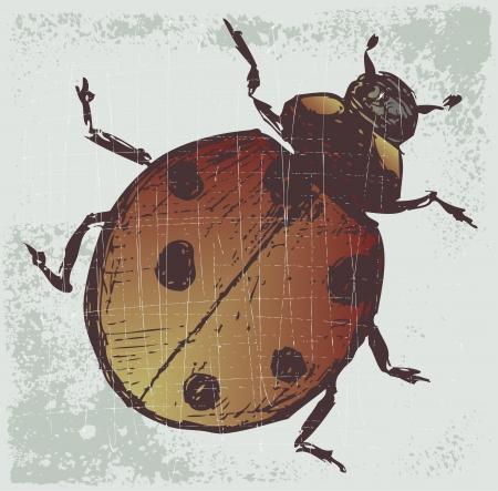 Ladybug. Grunge style Vector