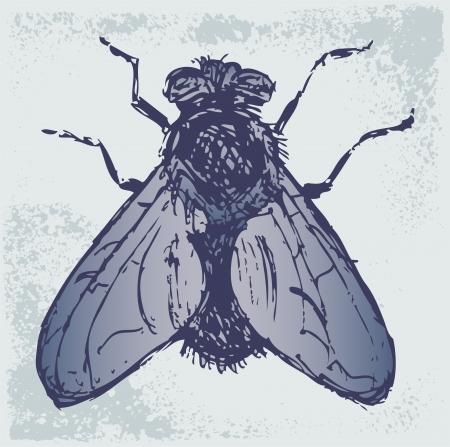 hum: Black flies. Grunge style