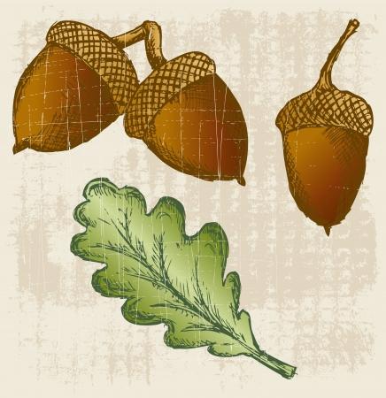 acorns: Acorn. Grunge style