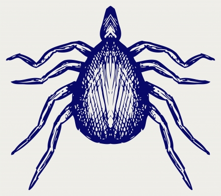 lyme: Mite bug. Doodle style Illustration