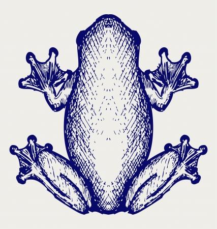 exotic frog: Frog sketch. Doodle style Illustration