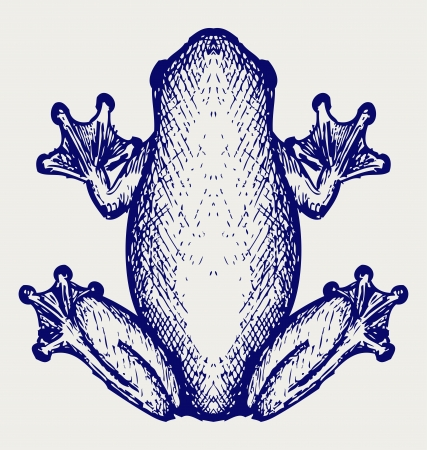 rana: Frog sketch. Doodle style Illustration