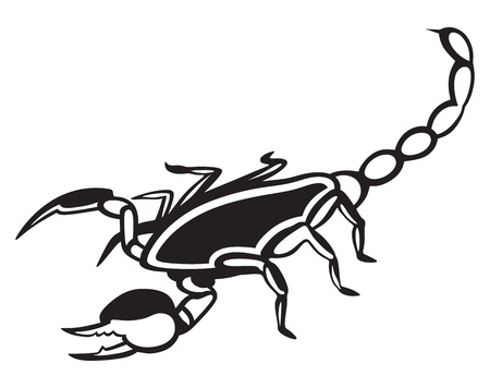 imperator: Scorpion Pandinus imperator isolated on white background