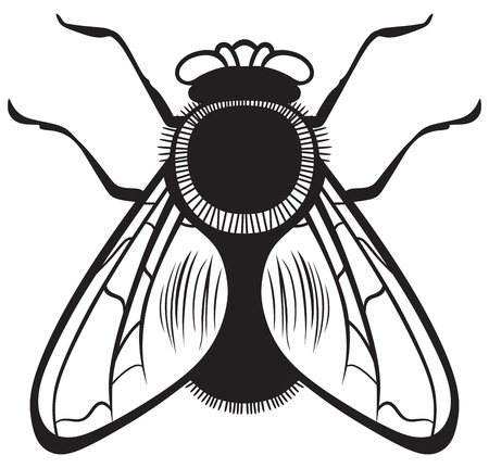hum: Fly on a white background Illustration
