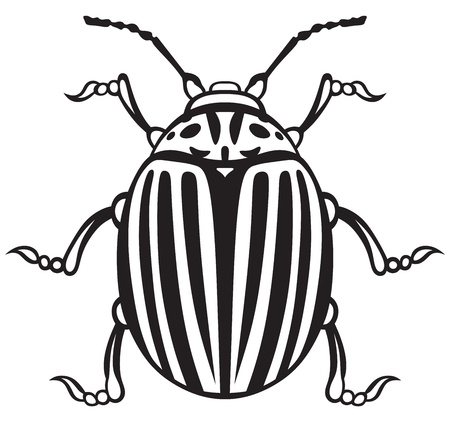 colorado: Colorado beetle isolated on white background Illustration