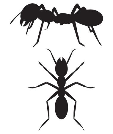 개미의 흰색 배경에 고립