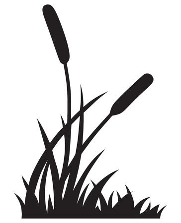 ance: Silhouette canna isolato su sfondo bianco